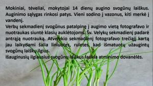 Ekrano kopija (5)